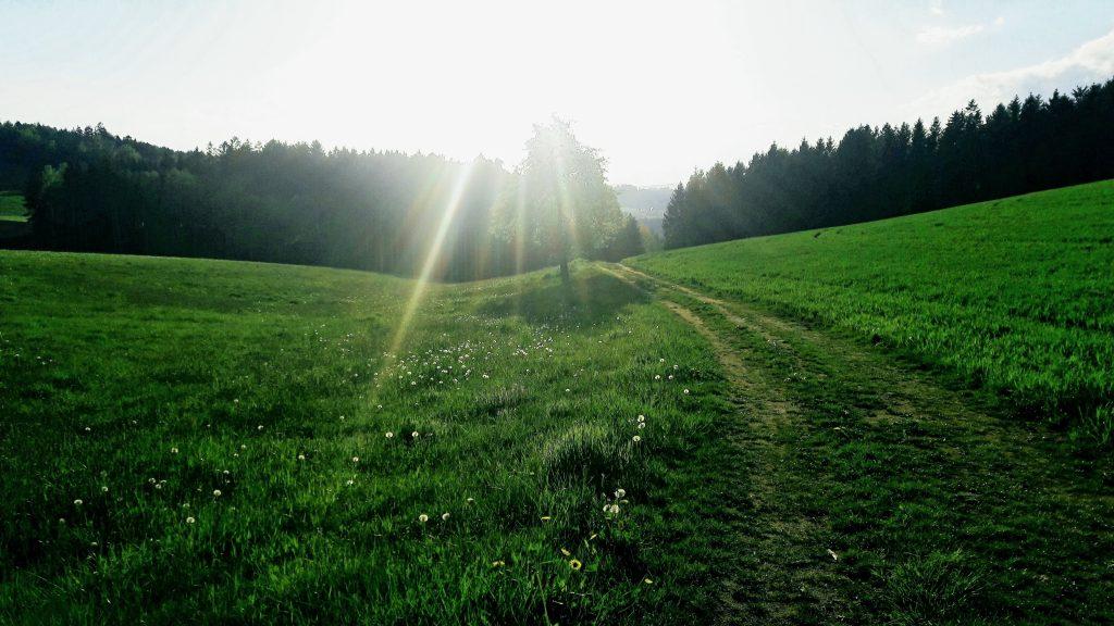Wanderwege rund um den Ferienhof Neundlinger