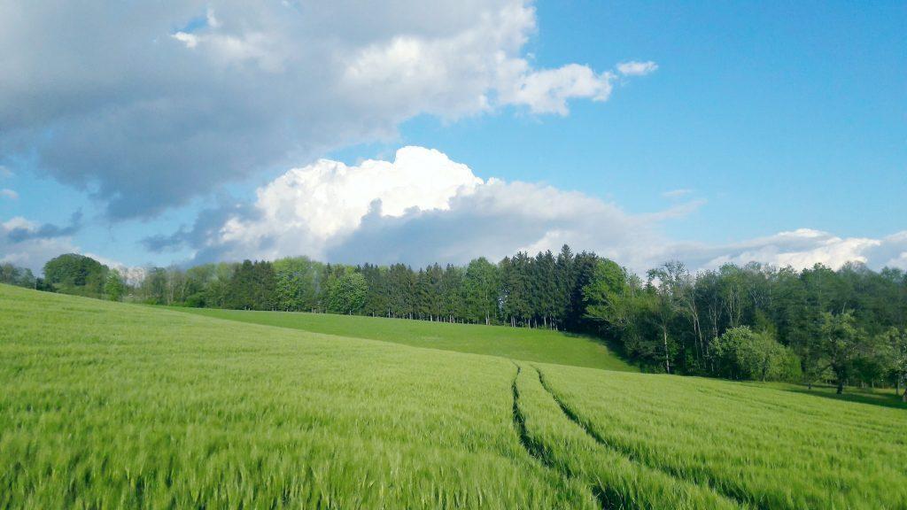 Felder und Wiesen in Niederwaldkirchen