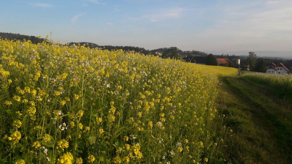 Felder und Wiesen im Mühlviertel