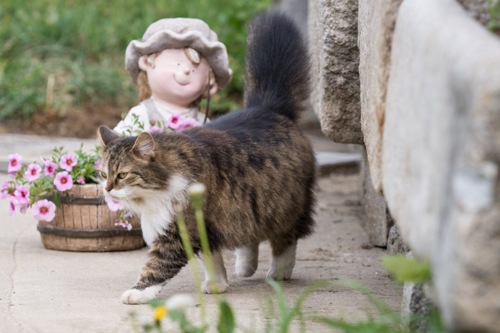 Katze am Neundlingerhof