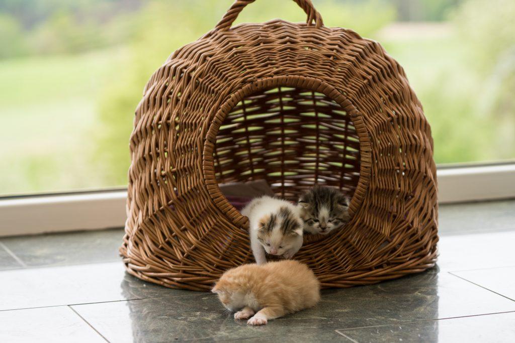 Babykatzen am Hof der Familie Neundlinger